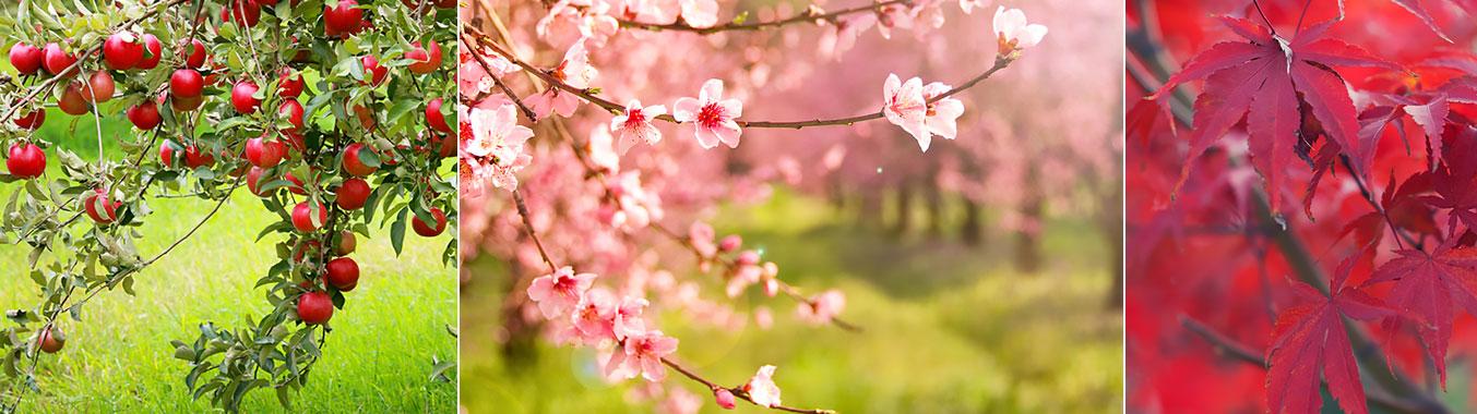 Trees add beauty